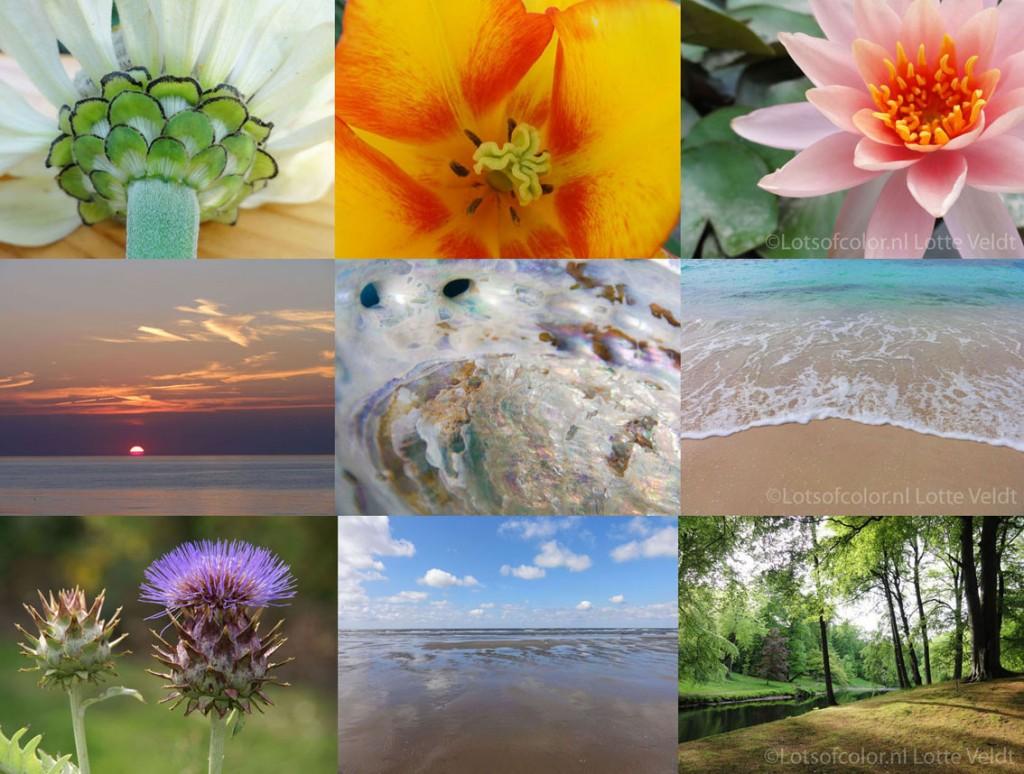 Lotsofcolor - Natuurfotografie - Praktijkinrichting - Online