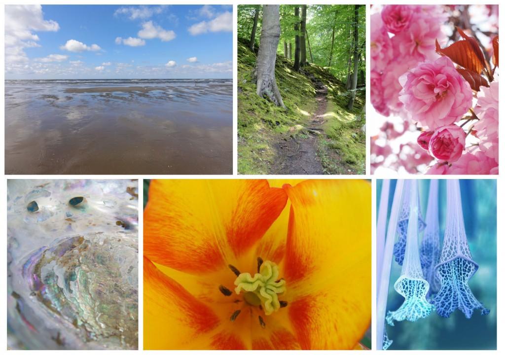 Lotsofcolor Natuurfotografie